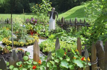 Planning Your Vegetable Garden Step by Step, the Right Way